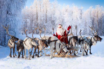 Reindeer Hire